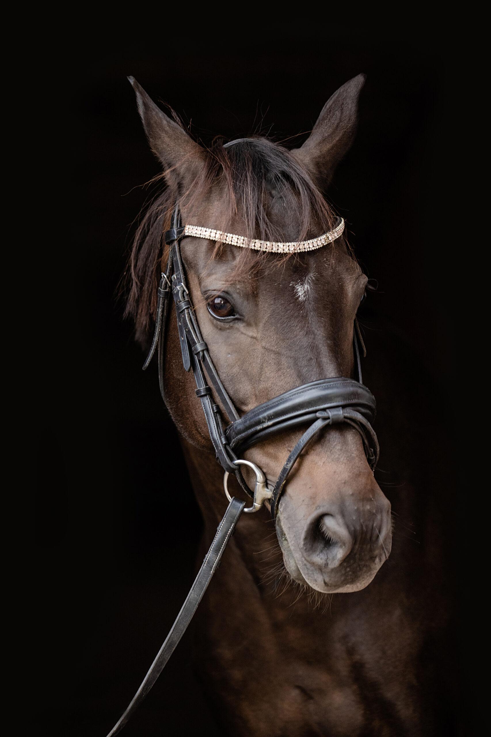 Hestefotograf